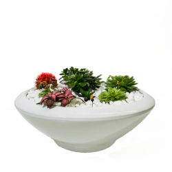 Mix Succulent in Pot SY 12259