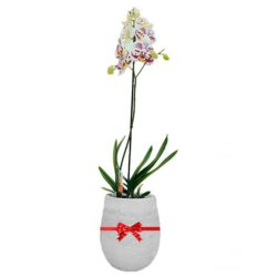 Orchid In Pot LT01